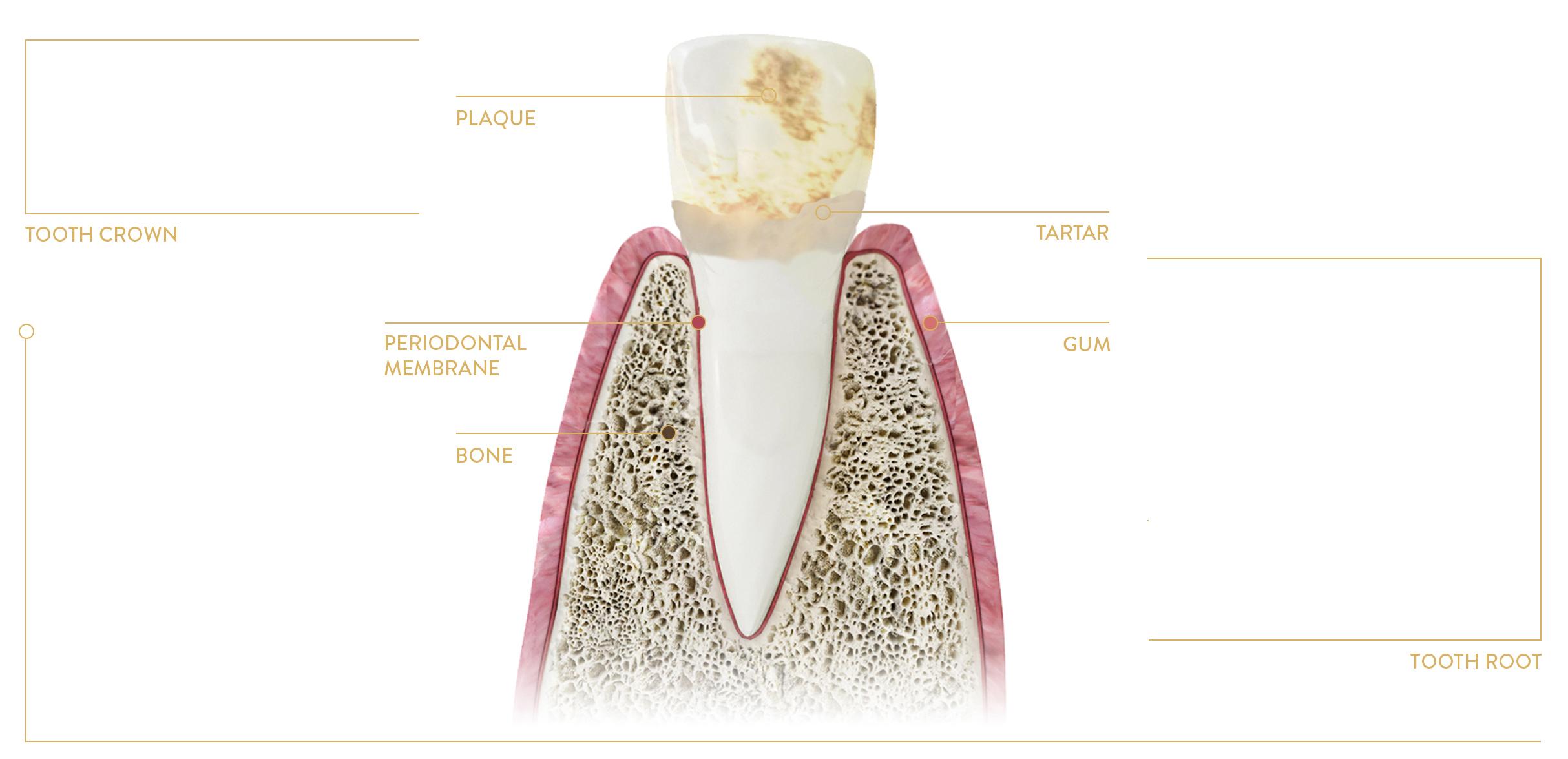 dental treatment poland